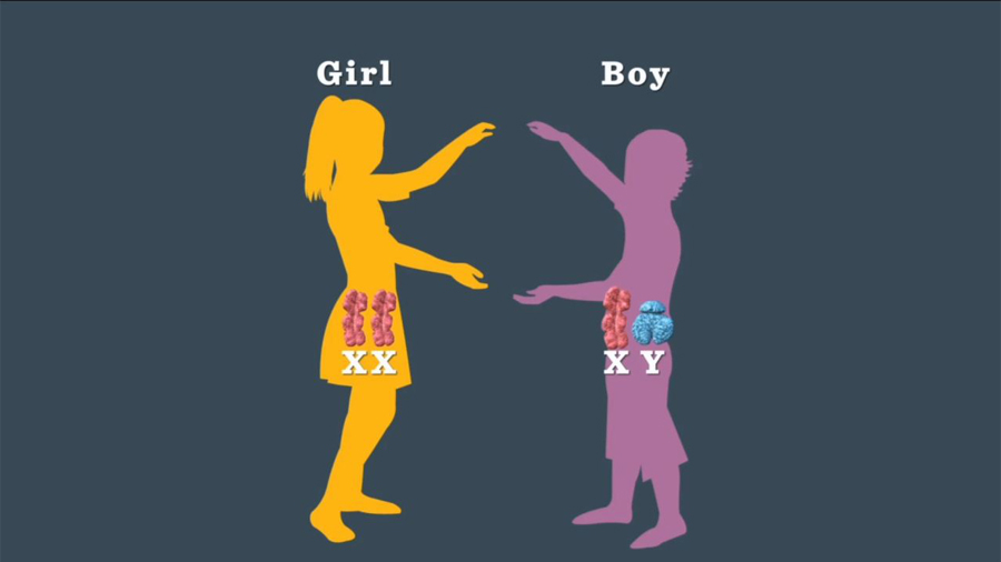 Image result for Boy or Girl? It's In the Father's Genes